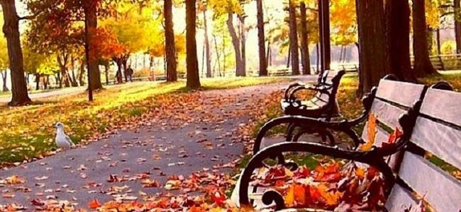 autumn_things6jpg